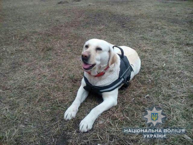 В Краматорске собака нашла пропавшего 12-летнего мальчика