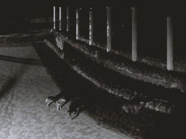 Cобаки проникли в зоопарк и загрызли животных