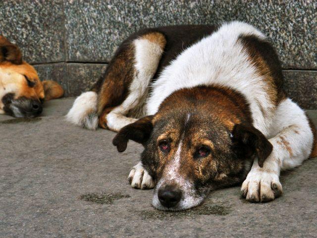 В Харькове стало меньше бездомных собак - опрос