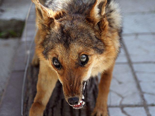 За год в Харьковской области нашли более ста бешеных животных
