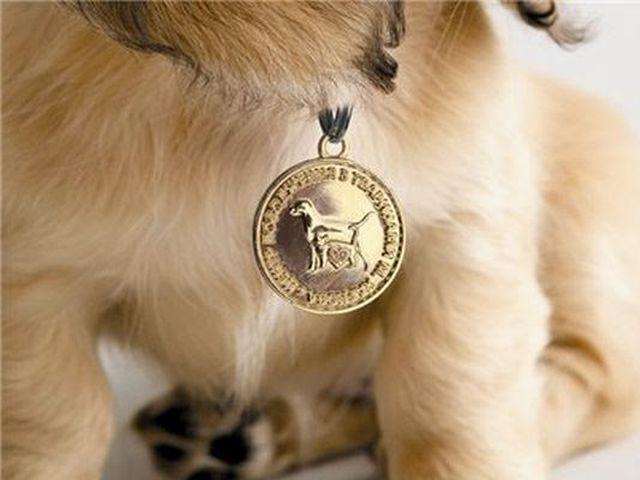 Милиционеры проверяют на улице наличие жетонов у домашних собак