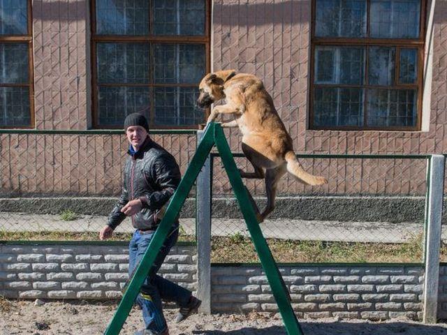 Занятия кинолога с собаками приюта стали регулярными