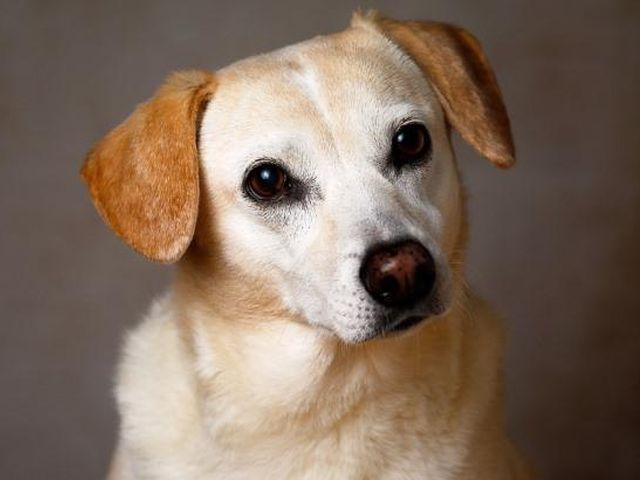 Жительница Запорожья выбросила щенка из окна многоэтажки