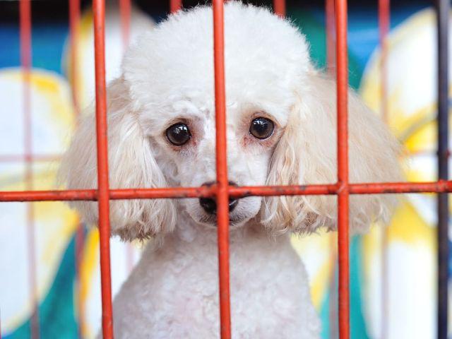 В Калифорнии запрещают продавать животных в магазинах