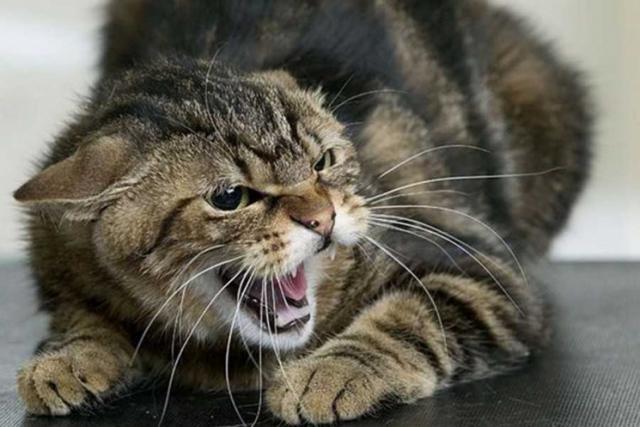 Харьковчан кусают домашние животные