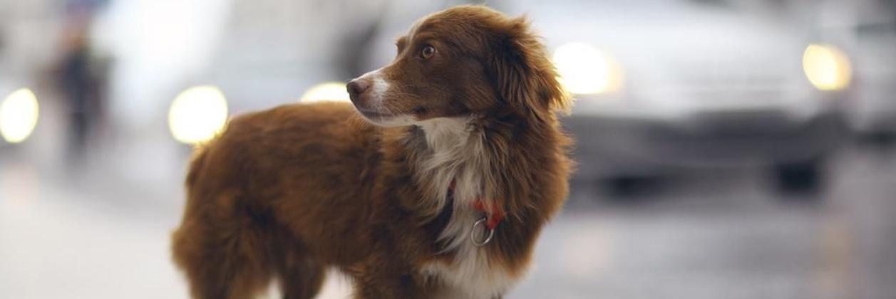 Служба поиска потерянных животных в Харькове