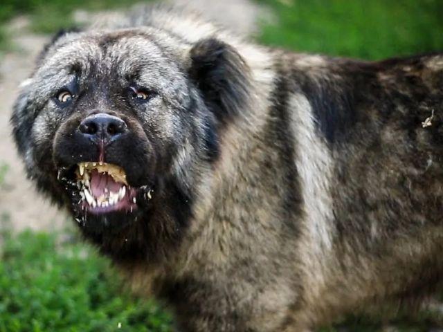 ЧП в Харькове. Собака набросилась на женщину с ребенком