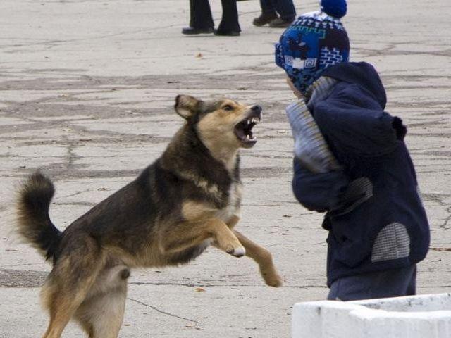 СМИ собрали хронику нападений собак на жителей Николаева за семь лет