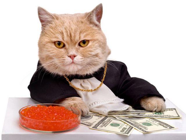 Пенсионерка завещала крупную сумму денег своему коту