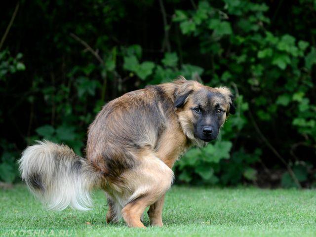 Обязать владельцев собак убирать следы жизнедеятельности своих четырехлапых друзей.