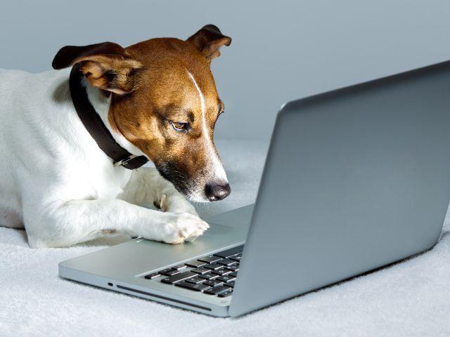 В Киеве запустят «Реестр домашних животных» для онлайн-регистрации питомцев и подсчета налогов на них