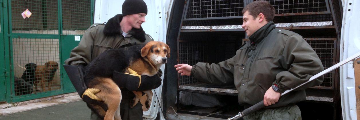 Отлов безнадзорных бродячих бездомных собак в Харькове