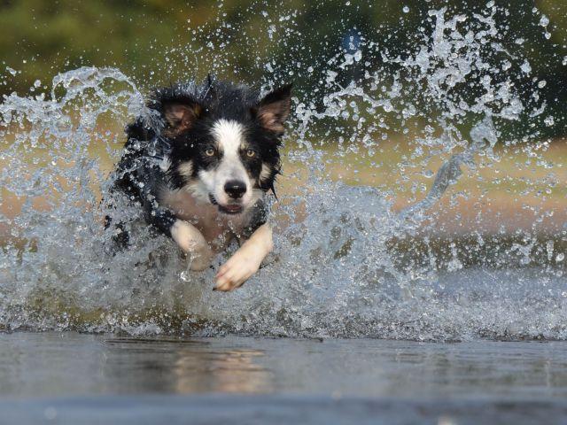 КП «Центр обращения с животными» напоминает правила купания собаки в водоемах летом