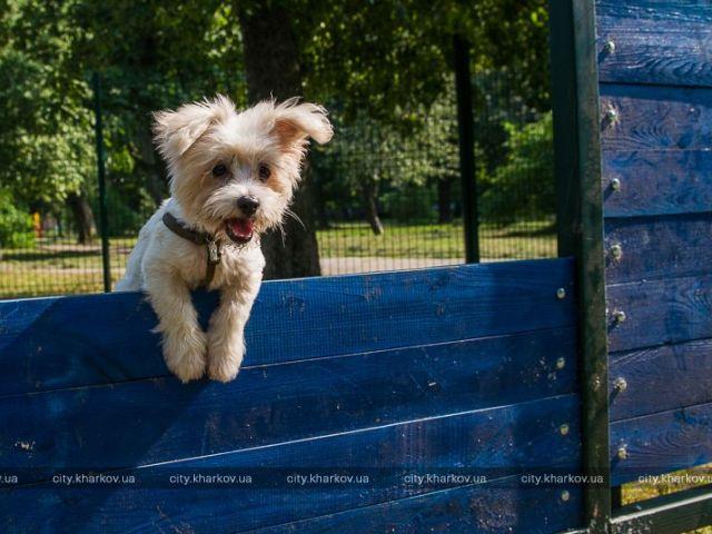 У Холодногірському районі з'явився перший майданчик для вигулу собак