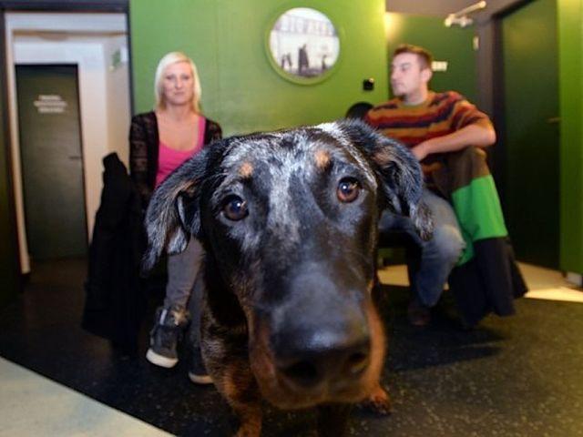 Создание правил для своей собаки