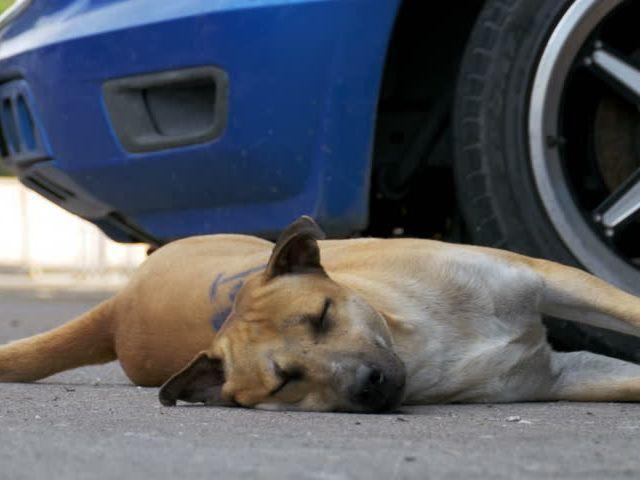 Жертву побега спасли ветеринары Центра обращения с животными