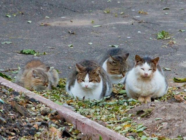 Неужели у нас на улице Шариковой бродячие коты и собаки дороже чем жизнь, здоровье детей и взрослых