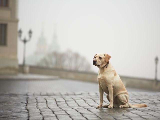 """Создана """"Служба поиска пропавших животных КП """"Центр обращения с животными"""""""