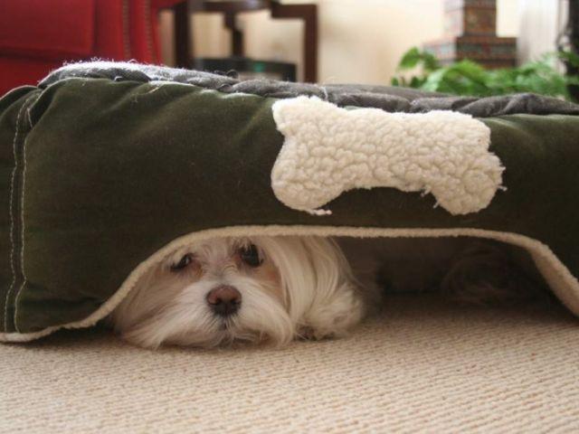 Почему смелые собаки так сильно боятся грозы