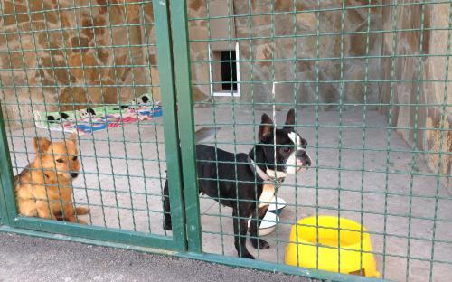 Харьковский приют для бездомных животных