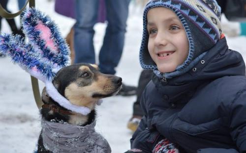 """Центр обращения с животными и волонтеры группы """"Открытое сердце"""" примут участие в зимнем Фестивале 14 января"""