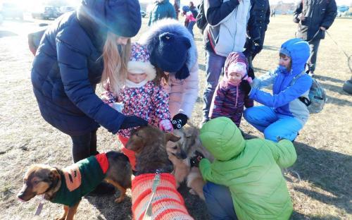 """Приютские собаки нашли друзей на празднике  """"Winter Dog Fest-2018"""""""