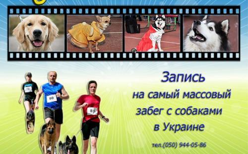 Центр обращения с животными ведет запись желающих принять участие в самом массовом забеге собак в Украине