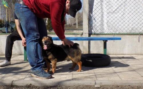 Три собаки с приюта Центра обращения с животными стали столичными жителями