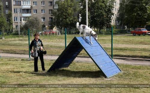 Новая площадка для дрессировки и выгула собак на Новых Домах