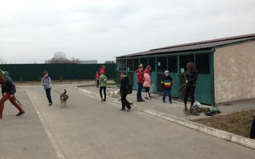 Масленичные гулянья в приюте для животных в Харькове