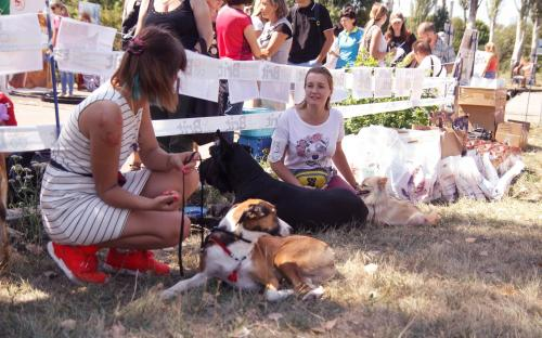 """КП """"Центр обращения с животными"""" благодарит всех, принявших участие в празднике, посвященному Всемирному дню бездомных животных!"""