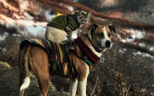 Дружба кота Балу и собаки Генри покорила Instagram