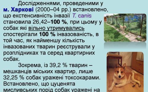 Токсокароз собак