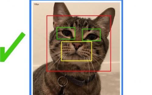 Microsoft создала «умную» дверь для домашних животных.