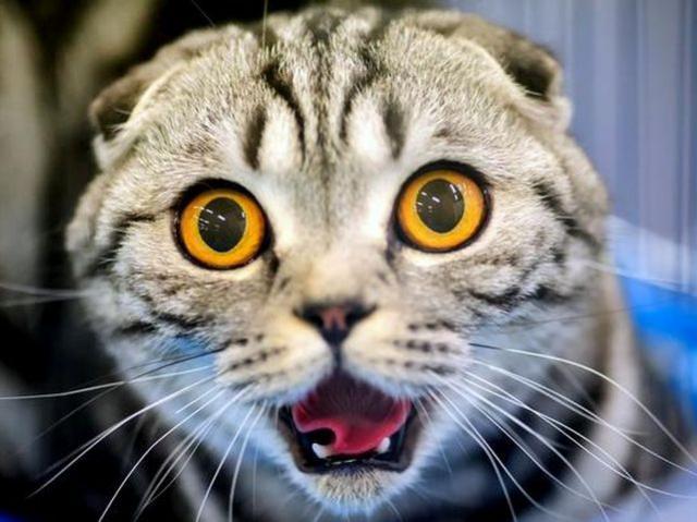 Власти Бельгии решили кастрировать всех котов.