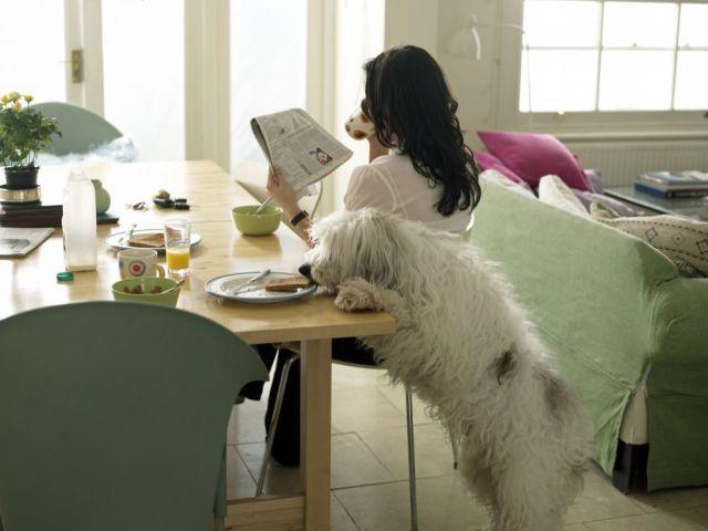 корректировка поведения собак