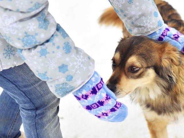 """КП """"Центр обращения с животными"""" приглашает журналистов СМИ города в приют посмотреть, как зимуют животные"""