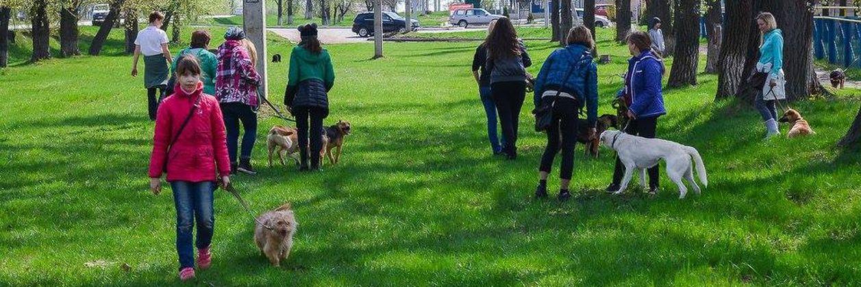 Выгул собак в харьковском приюте для собак