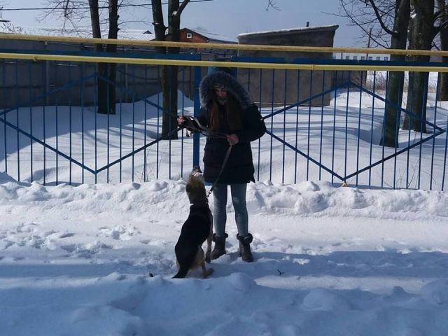 Выгул питомцев харьковского Приюта для бездомных животных 4 марта