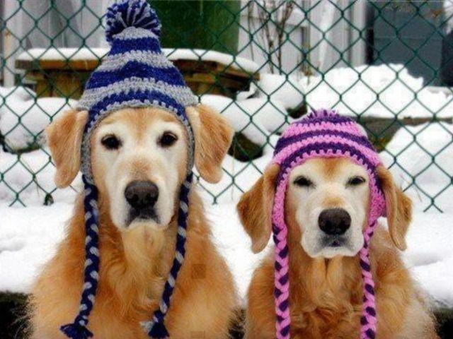 Зима близко... Эх, соломки бы подстелить!